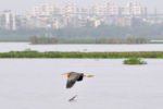 A city of birds: Delhi's feathered friends find home in dilapidated wetlands
