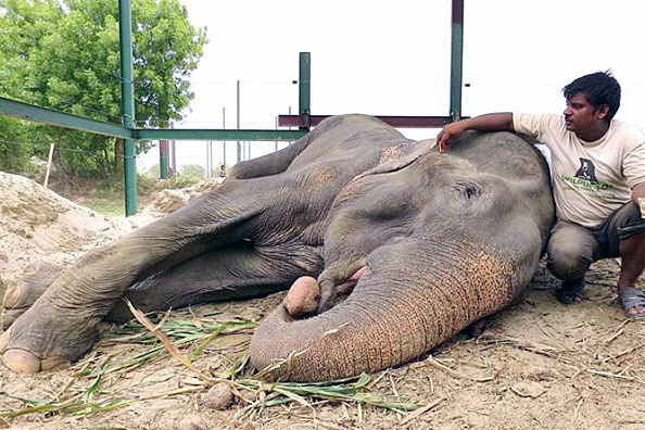 Delhi's 1st wild animal rescue centre to begin operations in Rajokri next month