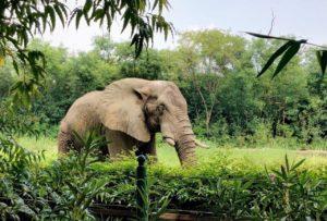 Shankar, Delhi zoo's lone African elephant alone